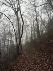 Foggy conditions on Rich Mtn. Loop