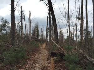 Devastation from a past windstorm