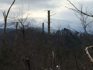 View of Chilhowee Mountain