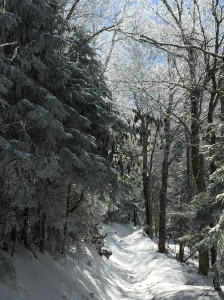 Snow on Maddron Bald Trail