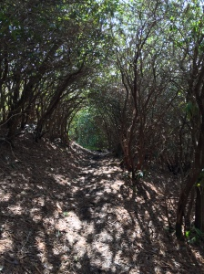 Rhododendron Tunnel on Russell Field Trail