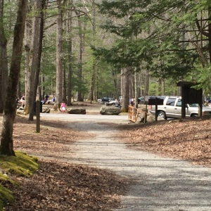 Anthony Creek Trailhead at Cades Cove Picnic Area