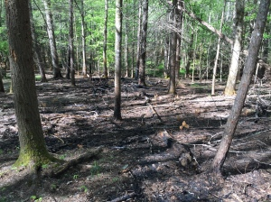 Burned Area on Wet Bottoms