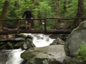 Cosby Creek on Low Gap Trail II